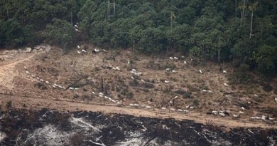 Burning in Amazon for Agriculture