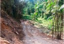 Agricultores pobres poderão ser anistiados por infrações ambientais leves