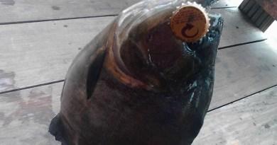 Peixe Fisgado com isca de tampa de garrafa