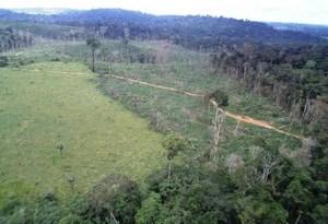 floresta amazônica desmatamento Pará (Foto: Nelson Feitosa/Ibama) Pará foi o estado que mais desmatou entre 2012 e  2013. (Foto: Nelson Feitosa/Ibama)