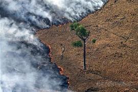 Queimada no Parque Florestal Jamanxin, no Pará, próximo a BR-163. (© Greenpeace/Rodrigo Baleia)