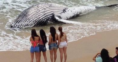 baleiajubartepraiadosinglesesflorianopolis