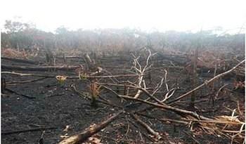 No-local-os-fiscais-ambientais-constataram-a-supressão-da-vegetação-e-queimada