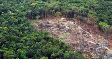 desmatamento-reproducao-ilustracao(1)(1)