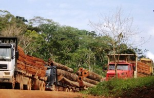Caminhões transportam toras e madeira serrada na região noroeste de MT. Foto: Daniela Torezzan/ICV
