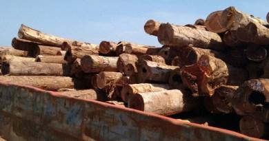 Operação apreende 600m³ de madeira ilegal (Divulgação/Polícia Civil de Juruti)