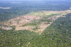 Desmatamento Amazônia, (foto Divulgação internet)