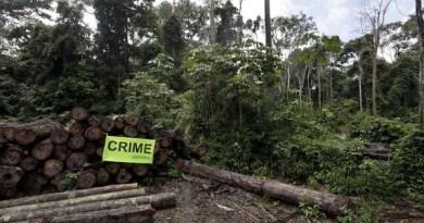 """A palavra """"crime"""" denuncia a retirada ilegal de madeira dentro do assentamento Corta-Corda, no Pará. (© Karla Gachet / Greenpeace)"""