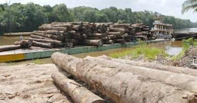 Madeireiros-tem-recursos-bloqueados-pela-Justiça