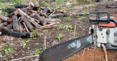 moto serra -usado para desmatamento