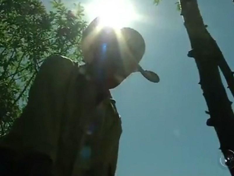 Um dos trunfos do produtor é o sol, que brilha forte praticamente o ano todo (Foto: Reprodução/TV TEM)