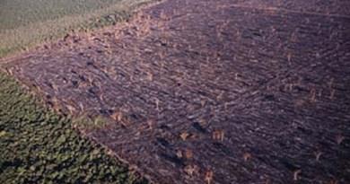 Desmatamento-na-área-do-Xingú-no-Pará