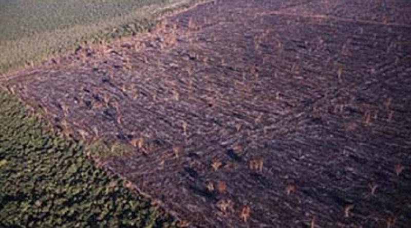 Resultado de imagem para MP denuncia novamente o maior desmatador da Amazônia à Justiça