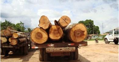 Operação-combate-transporte-ilegal-de-madeira-no-Pará