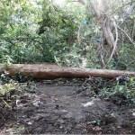 Garimpo- Homem morre após ser atingido por árvore