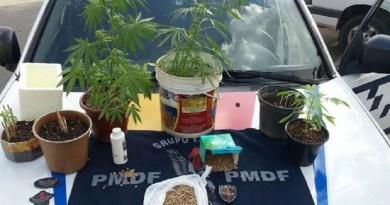 Pés e sementes de maconha achados em casa do Recanto das Emas, região administrativa do Distrito Federal (Foto: Polícia Militar/Divulgação)