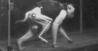 1-macacos-utilizados-na-pesquisa-tinham-apenas-uma-perna-paralisada-credito-epfl