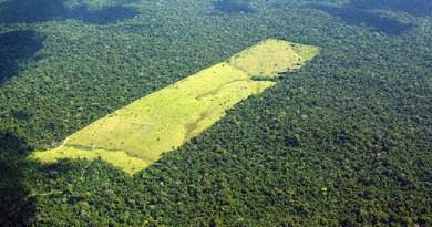 desmatamento-moraes-almeida