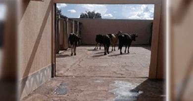vacas_motel