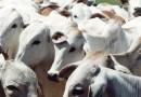 Crise na indústria de carne deve durar até 2019, avaliam especialistas