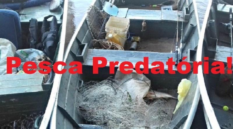 pesca predatoria