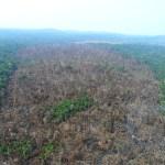 Chefe de fiscalização do Ibama é ameaçada no Pará