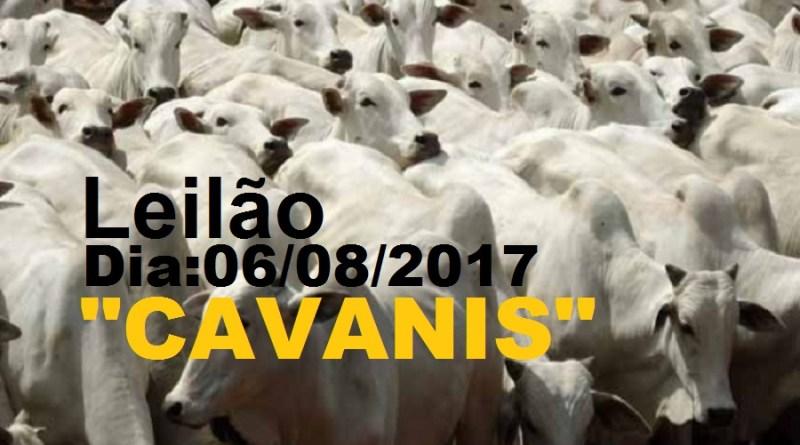 bovinos cavanis