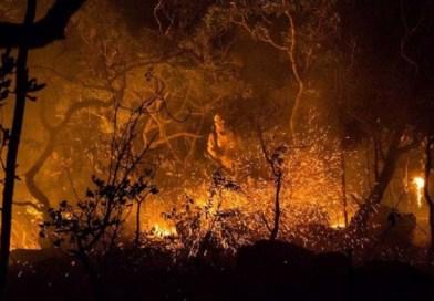 Incêndio na Chapada dos Veadeiros já consumiu quase 15% do parque