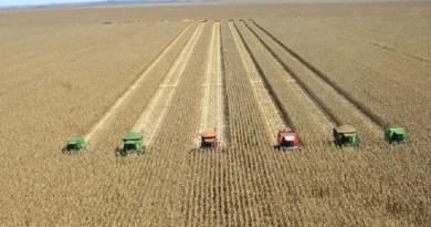 colheita milho
