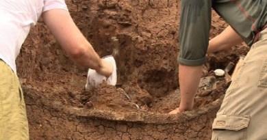 Fóssil de animal pré-histórico é encontrado no RS