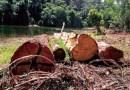 Desmatamento inibe produção de peixe, diz pesquisa