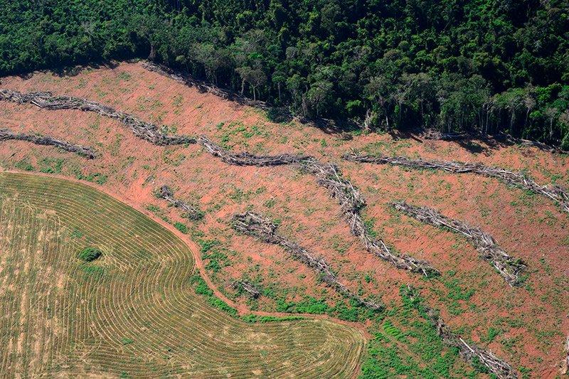 Desmatamento em região próxima ao local onde os deputados decidiram reduzir a área de proteção, em Novo Progresso, Pará. Foto: Vinícius Mendonça/Ibama.