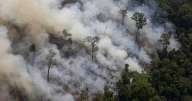 Pesquisadores dizem que fumaça de queimadas podem causar câncer
