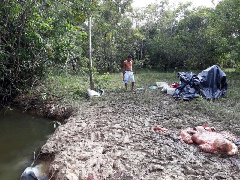 Restos de boi encontrado em margem de rio após naufrágio de embarcação em Altamira, no sudoeste do Pará (Foto: Divulgação/Marinha do Brasil)
