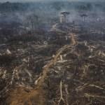 Alvo de controvérsia, floresta do Jamanxim, no Pará, tem alta no desmate