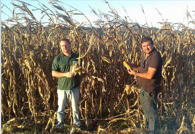 Secretario Juliano Simionato e Prefeito Macarrão na colheita do milho (Foto:Jornal Folha do Progresso)