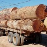 Caminhão com carga ilegal de madeira é apreendido em Novo Progresso