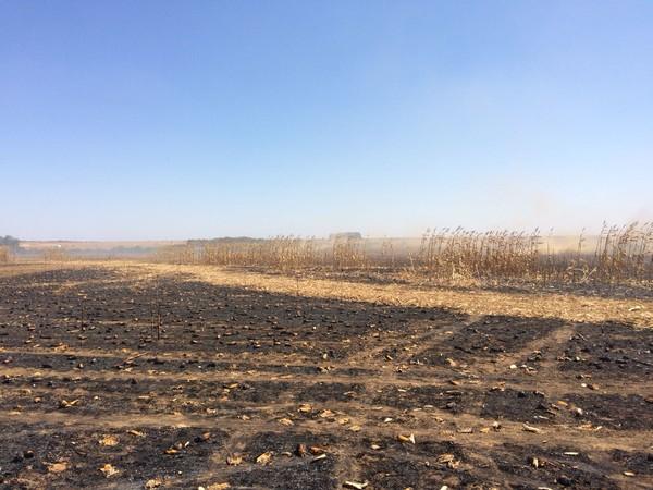 Aproximadamente 40 hectares foram atingidos pelas chamas (Foto: Márcio Falcão/TVCA)