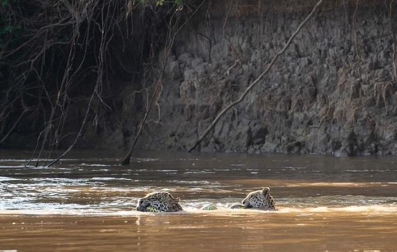 Mãe e filho atravessa rio com cobra na boca (Foto: Arjan Jongeneel/Arquivo Pessoal)