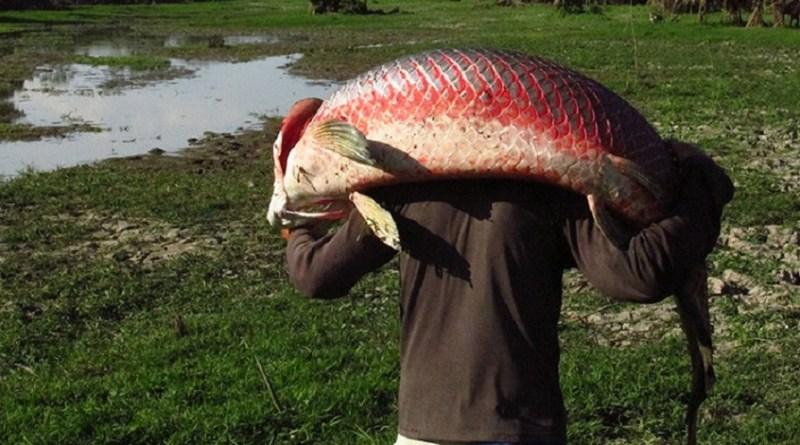Pescador...