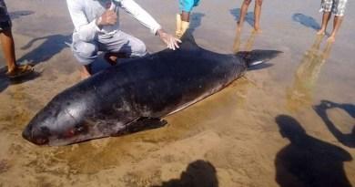 baleia2