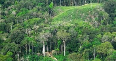 Floresta no Acre. Foto: Wikimedia Commons