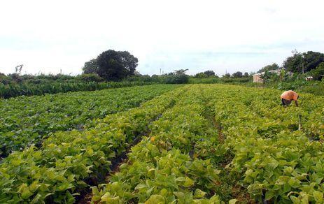 Governo federal estuda alteração no crédito para produção e seguro rural – Elza Fiúza/Agência Brasil