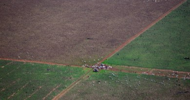 MATO GROSSO 13.10.2015 METRÓPOLE EXCLUSIVO EMBARGADO ESPECIAL ***ATENÇÃO NÃO PUBLICAR ANTES DO ESPECIAL*** AMAZÔNIA CERRADO FLORESTA SOJA CADERNO ESPECIAL COP ONU *** Equipe do jornal sobrevoou de helicóptero com fiscais do Ibama 240 quilômetros entre Sinop e Brasnorte. Foram avistados muitos hectares de desmatamento de floresta amazônica, mata de transição e cerrado para dar lugar a plantações gigantescas de soja e pastagem para gado. desmatamento para dar  Reportagem do Estadão percorreu diversas cidades do estado do Mato Grosso, estado que segundo medições foi o que mais desmatamento teve no ano, para conversar com fazendeiros de soja, ambientalistas, pesquisadores, índios e coletores de sementes para traçar um perfil das mudanças climáticas. FOTO  TIAGO QUEIROZ/ESTADÃO