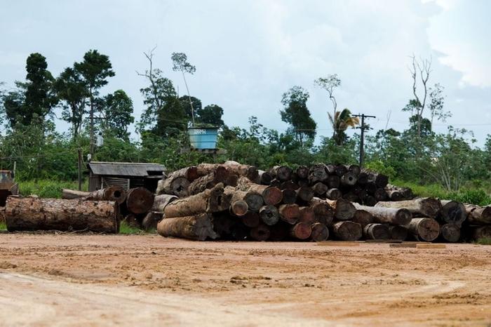 Relatório aponta que empresas estrangeiras financiam desmatamento na Amazônia Relatório aponta que empresas estrangeiras financiam desmatamento na Amazônia (Agência Brasil)