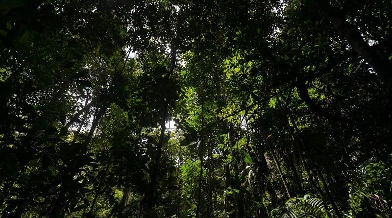 floresta manejada