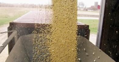 Teor de proteína de soja no Brasil cai e coloca vendas à China em risco