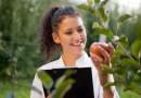 Dia Mundial da Agronomia: as práticas de uma agricultura sustentável