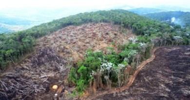 desmatamento-ilegal-amazonia