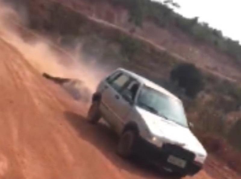 Boi é saqueado e arrastado pela estrada após caminhão tombar no Pará. — Foto: Reprodução / TV Liberal